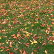 Fallen Leaves — Stock Photo #6450771