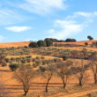 Castilla-La Mancha, Spain at winter — Stock Photo