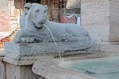 Fuentes de león — Foto de Stock