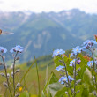 Small blue flowers from Alps — Stock Photo