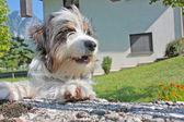 Dog near the house — Stock Photo