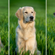 Portrait of a dog - Stock fotografie