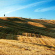 Golden stubble in the Italian Tuscany — Stock Photo