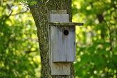 Bird`s Nest Box — Stock Photo