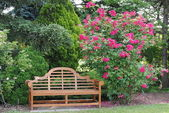 Garden Bench and a Rose Bush — Stock Photo