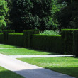 Garden Hedge — Stock Photo