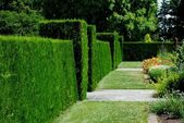 Garden Hedge — Stock Photo