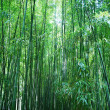 Asian Bamboo forest — Stock Photo