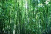 Asian Bamboo forest — Stockfoto