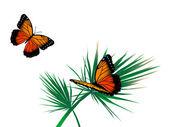 蝶 — ストックベクタ