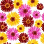Daisy seamless — Stock Vector