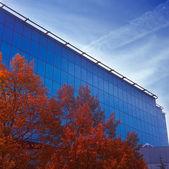 Orange and blue in autumn. — Stock Photo