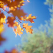Fall trees against the blue sky. — Stock Photo #6581212