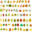 Vector leafs illustration — Stock Vector