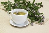Mint tea /Mentha aquatica/ — Stock Photo