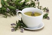 Mint tea lat. Mentha aquatica — Stock Photo