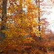 Illuminated golden autumn forest — Stock Photo