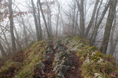 Hiking trail on ridge with mist — Stock Photo