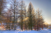 Ice crusted trees — Stockfoto