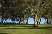 Early Morning Trees Near The River Bank In Summer — Stock Photo