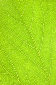 Green Leaf Macro Background Texture Closeup — Stock Photo