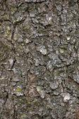 Grungy Bark Texture Background, Macro Closeup — Stock Photo