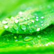 Drops of water on a green leaf — Stock Photo