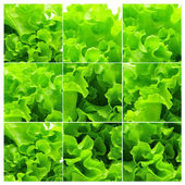 Collage of green salad leaves — Stock Photo