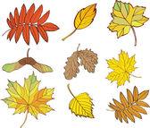 набор листьев, изолированные на белом фоне — Cтоковый вектор