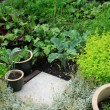 Vegetable Garden — Stock Photo #5452264