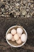 新鲜的鸡蛋 — 图库照片