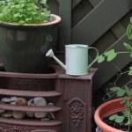 Garden Scene — Stock Photo #5798427