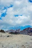Drzewo na pochmurne niebo — Zdjęcie stockowe