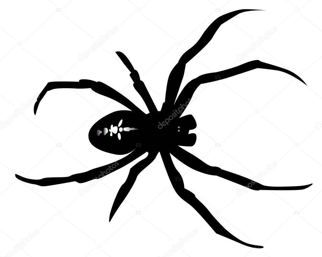 black widow spider silhouette - photo #10