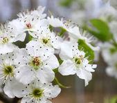 Springtime — Foto de Stock