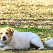 Frisky Jack Russel — Stock Photo #5459687