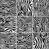 Set zebra texture black and white — Stock Vector