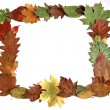 Autumn leaves frame - 图库照片