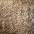 Dogs Fur — Stock Photo