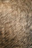 Dogs Fur — Stock Photo