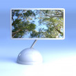 Design Screen - Eucalyptus Trees - Stock Photo