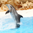Bottlenose dolphin performing tail stand — Stock Photo #5518596