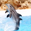Bottlenose Dolphins performing in show — Stock Photo #5836273