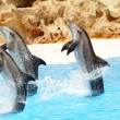 Three Bottlenose Dolphins performing tail stands — Stock Photo #5836279