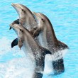Group of bottlenose dolphins (Turisops Truncatus) — Stock Photo #5869721