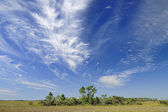 Cirrus Clouds over the Florida Everglades — Stock Photo