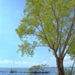 Buttonwood Biscayne National Park — Stock Photo #6370469