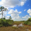 Everglades Landscape - 9 — Stock Photo #6370974