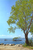 Buttonwood Biscayne National Park — Stock Photo