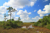 Everglades Landscape - 9 — Stock Photo